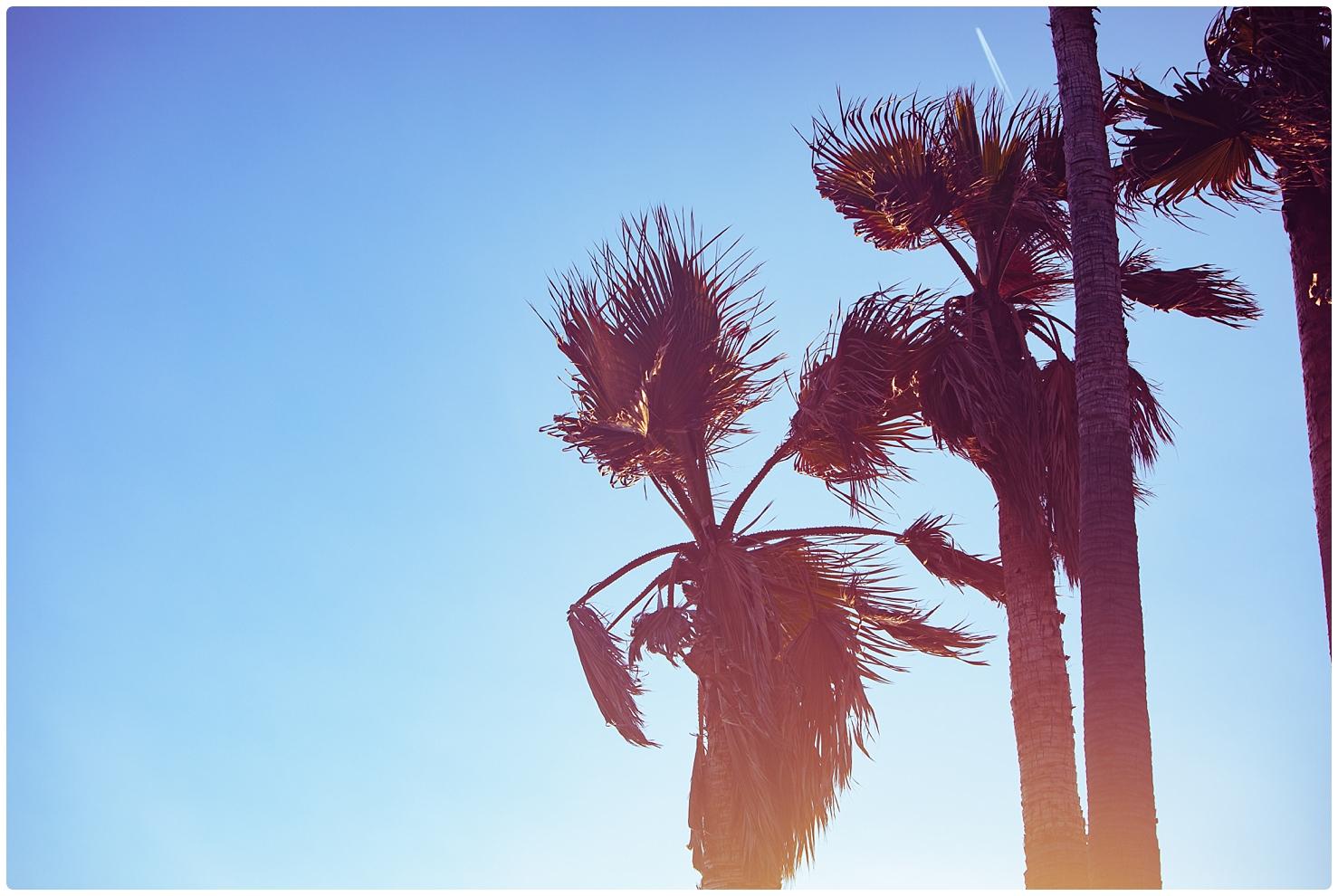 Beach,California,Venice,Venice Beach,haylo photo,haylo photography,northern virginia photographer,